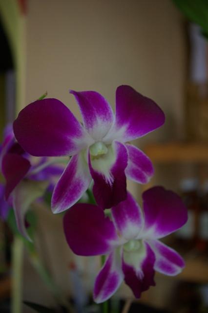 quelques fleurs du guatemala